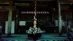 SHINOBU SAKURA【Music Video】KENTA HAYASHI